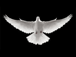 Jonah, Bitterness of a Dove