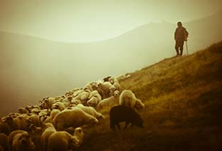 My Needs and Faith in My Shepherd